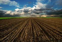 Plowed dirt field