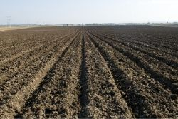 picture of a plowed field